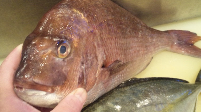 思春期な魚